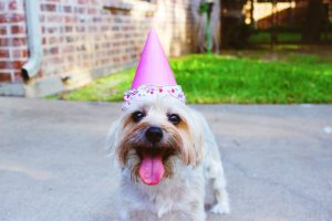 Small dog wearing a party hat